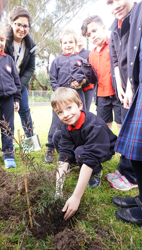 /uploaded_files/media/gallery/1504594583170728 | Tree Planting-35.jpg